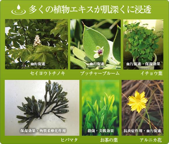 多くの植物エキスが肌深くに浸透